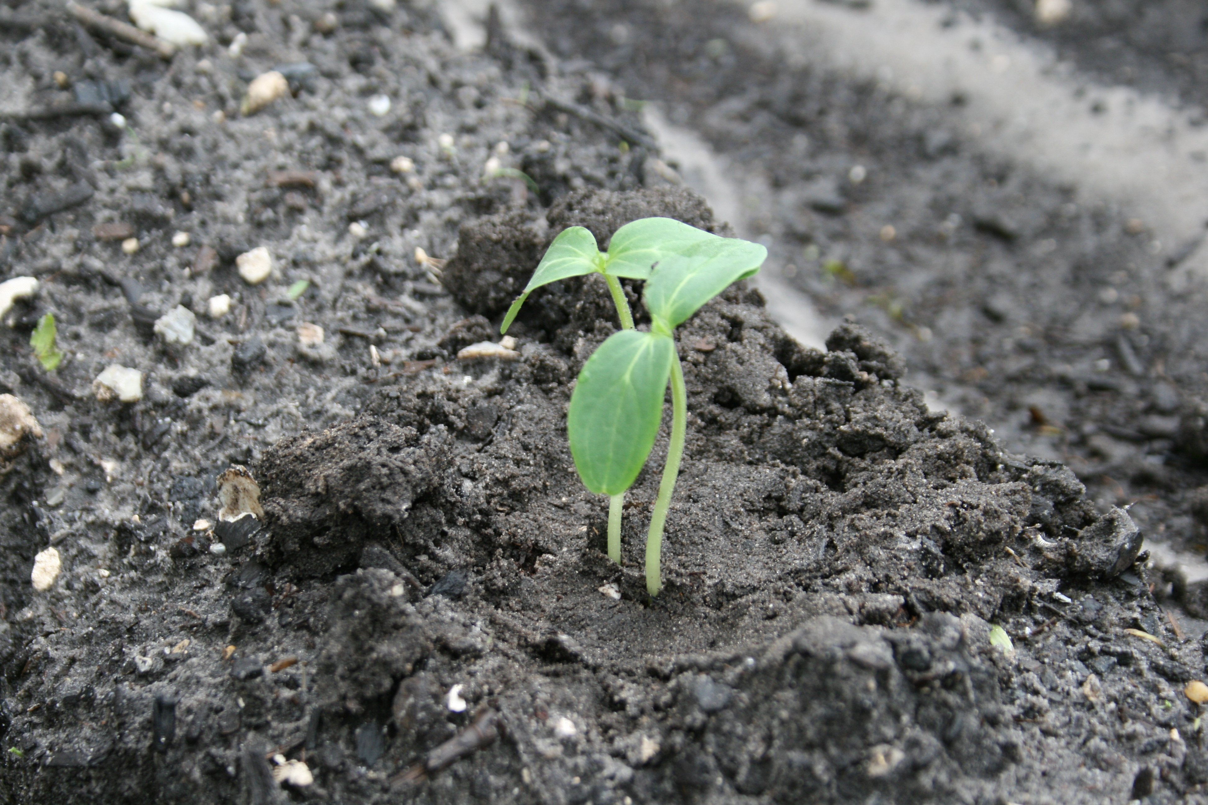 Naturally loriel egg carton gardening uhh the roots for When to transplant lemon tree seedlings
