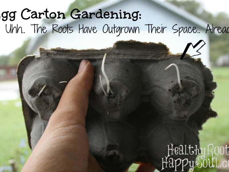 egg carton gardening roots