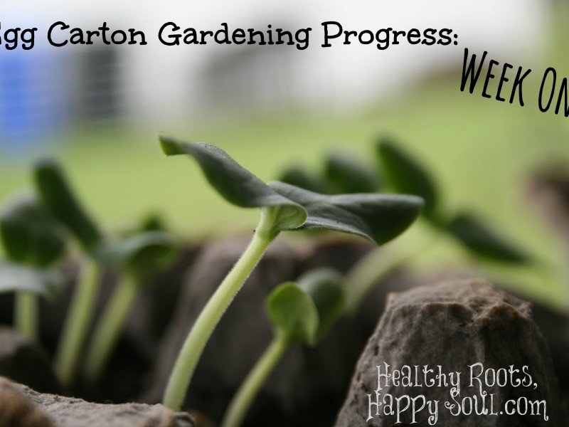 egg carton gardening week one