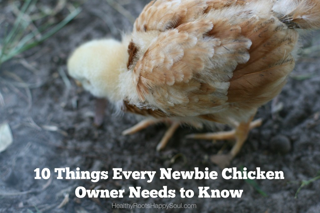 10 things every newbie chicken owner needs to know. Some of them humorous, some of them necessary to steer away from stress.