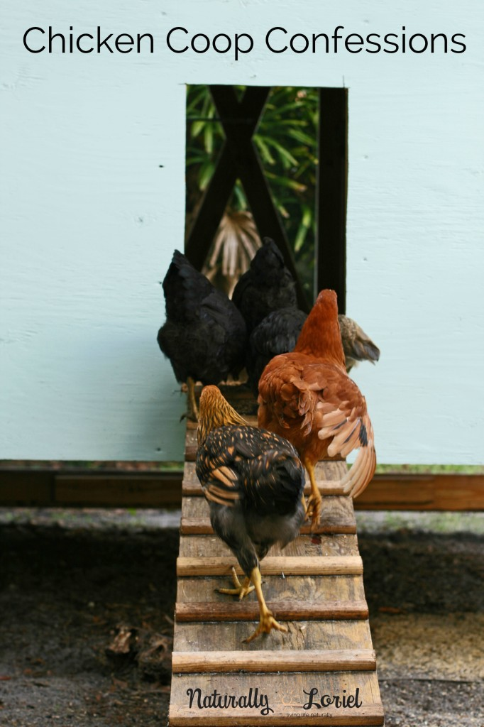 Time for some chicken coop confessions aka learn from my mistakes!
