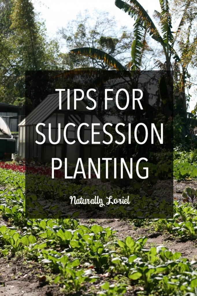 Succession planting is a great way take advantage of your garden space and to ensure the largest produce yields possible. Learn more about it here.