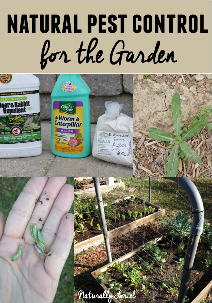 Here Are Some Natural Pest Control Methods For The Garden For Pests Like  Deer, Rabbit