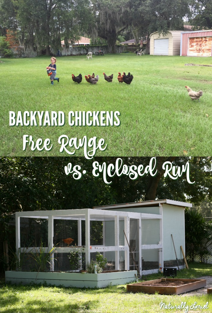 What's better when it comes to your backyard chickens? Free-ranging or keeping them in an enclosed run? Find out in this post!